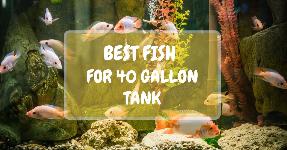 Best Fish For 40 Gallon Tank 2021 Stock Ideas How Many Fish Alibaba.com offers 1,183 40 gallon tank products. successful aquarium
