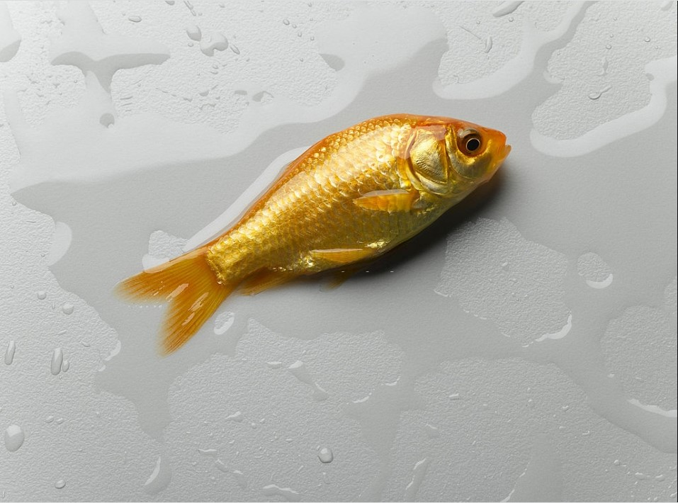 How Long Can A Fish Live Out Of Water Successful Aquarium