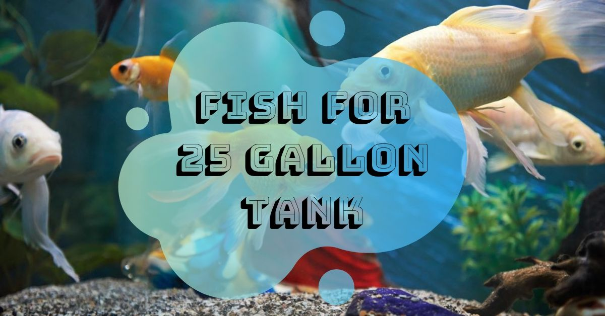 fish for 25 gallon tank